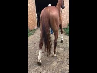 Видео от Horse Fire