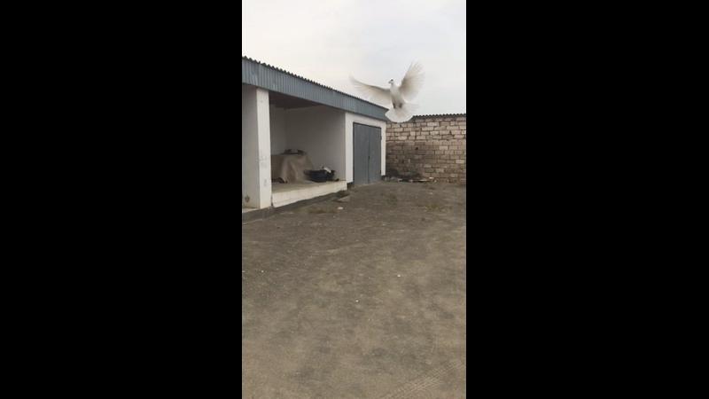 Видео от Маратова Бекзата