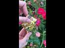 Hala by Khalis 🦋 Мускусная бабочка…