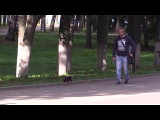 Во Владимире запрещено выгуливать собак в местах отдыха, на спортивных и детских площадках.mp4