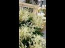 Цветы которые мы получаем