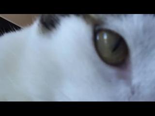 Video by Кошкам нужна ваша помощь! Спб