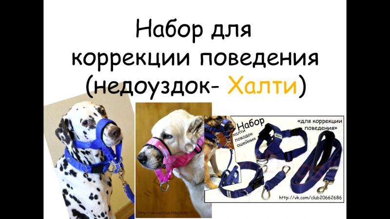 Недоуздок ХАЛТИ (набор для коррекции поведения собаки)