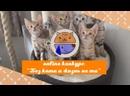 Online конкурс Без кота и жизнь не та