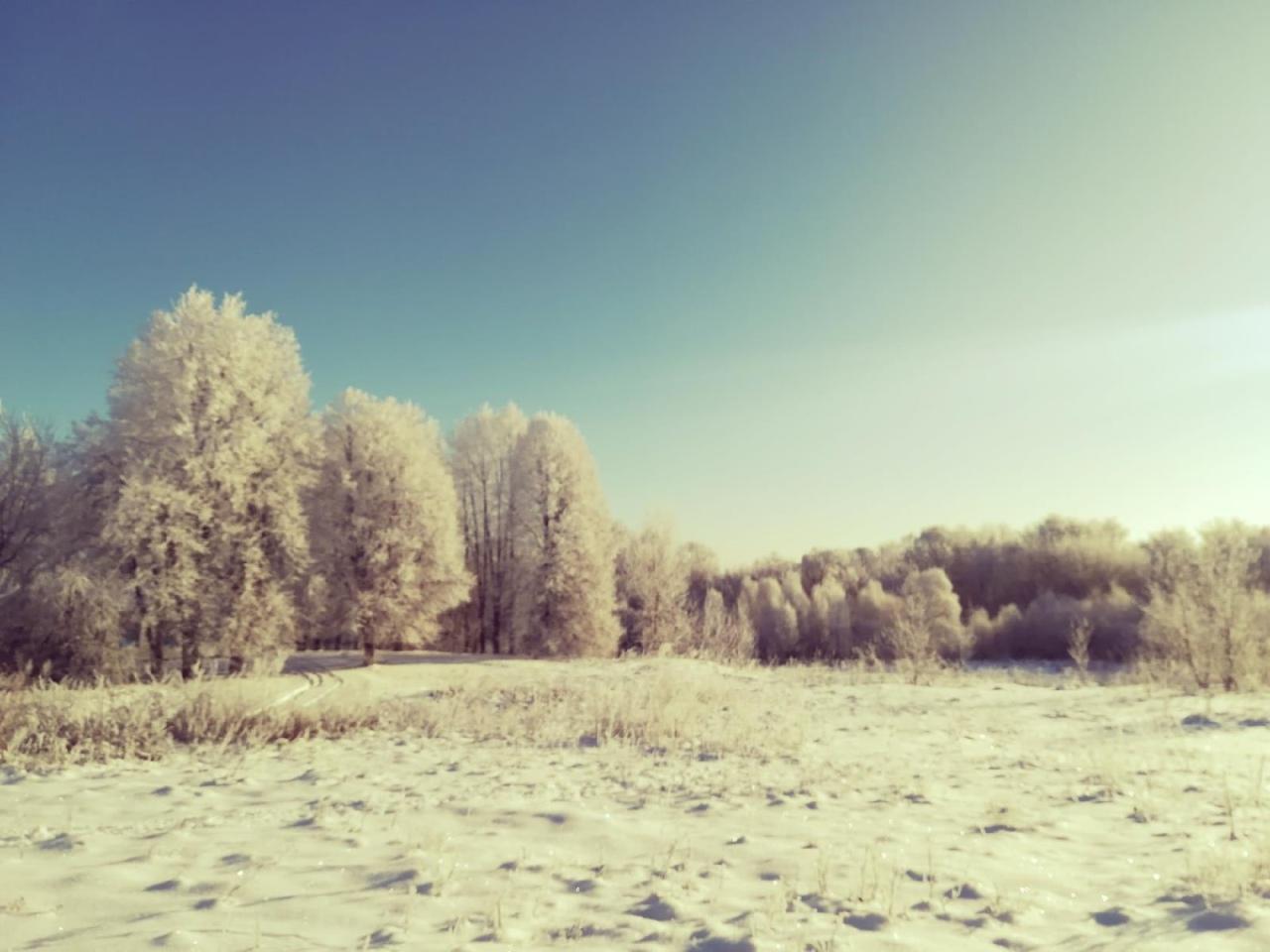 Ночью в Курской области синоптики прогнозируют до 27ºС мороза, а днем -7ºС