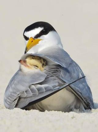 мамы в мире животных