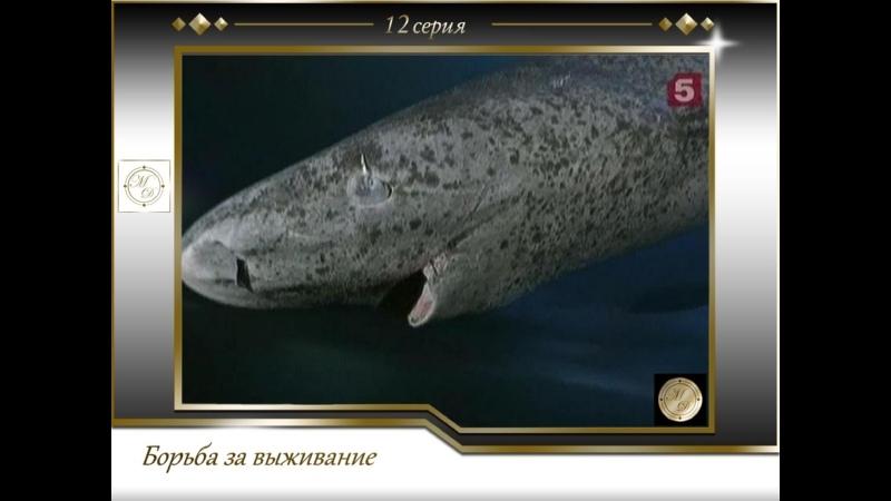 Борьба за выживание 12 серия Акулы Юрского периода
