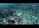 Дикий мир океана 1 серия. Индонезия / Ocean Wild 2020