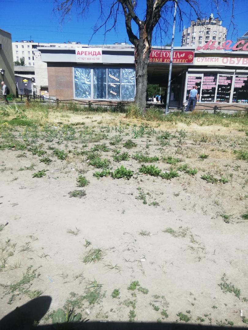 Вырубают деревья и не ухаживают за газонами — у Серова стремительно уничтожают район