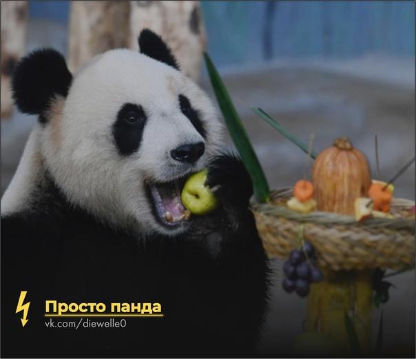 Панда ест фрукты, и ты себе мандаринов купи) Панда плохого не посоветует.