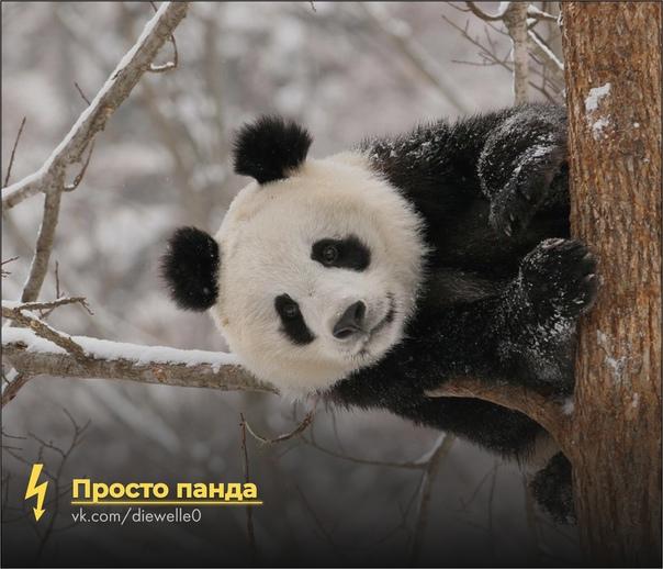 Просто милая панда улыбается тебе в последний раз в этом году. И ты улыбнись панде ^_^
