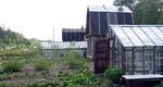 ВС запретил россиянам держать на садовых землях кур и мелкую 91105