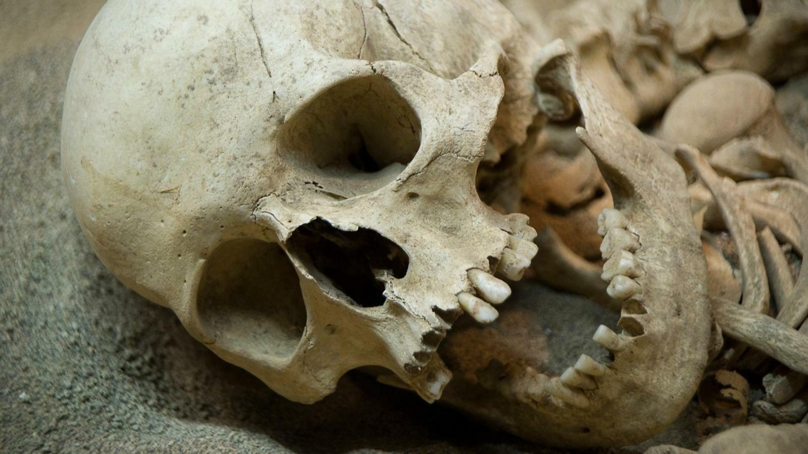 Три человеческих черепа и кости нашли на