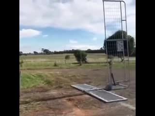 Интересная идея для ворот!
