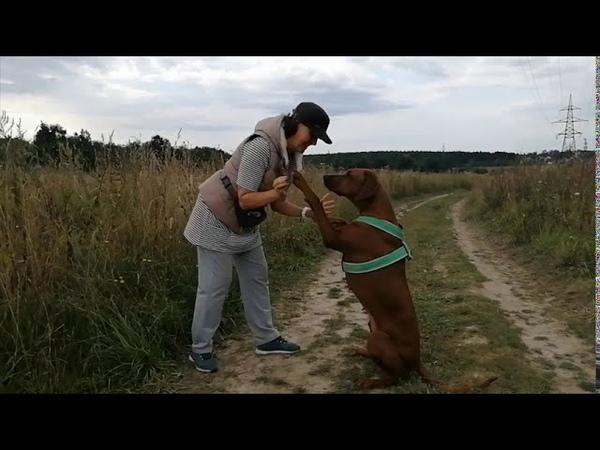 Риджбек Боня Большая прогулка для любимого зверя