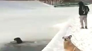 Спас собаку из воды рюкзаком