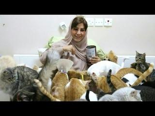 Große Leidenschaft: Ein Herz für 480 Katzen