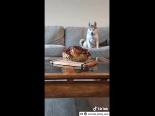 Ну вот зачем так издеваться над собакой?!