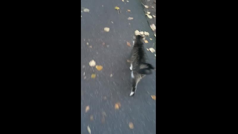 Котик бездомный серенький. Ноябрь 2020