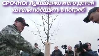 Митинг Беларусь Сегодня | Лукашенко и его детей планировали посадить в погреб для картошки | Минск