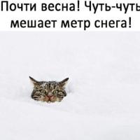 Фотография профиля Таисии Фориковой ВКонтакте