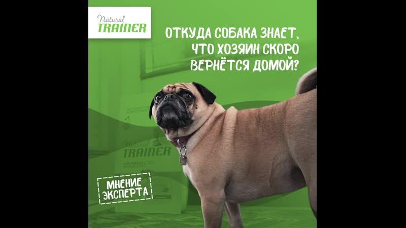 Откуда собака знает что хозяин скоро вернётся домой