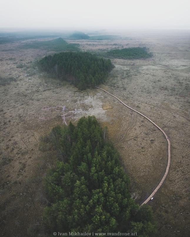 Экотропа «Сестрорецкое болото»