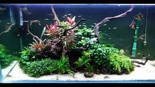 Мои природные аквариумы