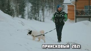 Приисковый 2021. Классные собачки, белый снег, прекрасные весенние виды в общем всё, как мы любим!
