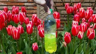 Весной внесём это под тюльпаны и нарциссы и все падают от такой красоты!