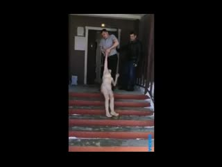 На Сахалине мужчина протащил по улице свою сожительницу NR